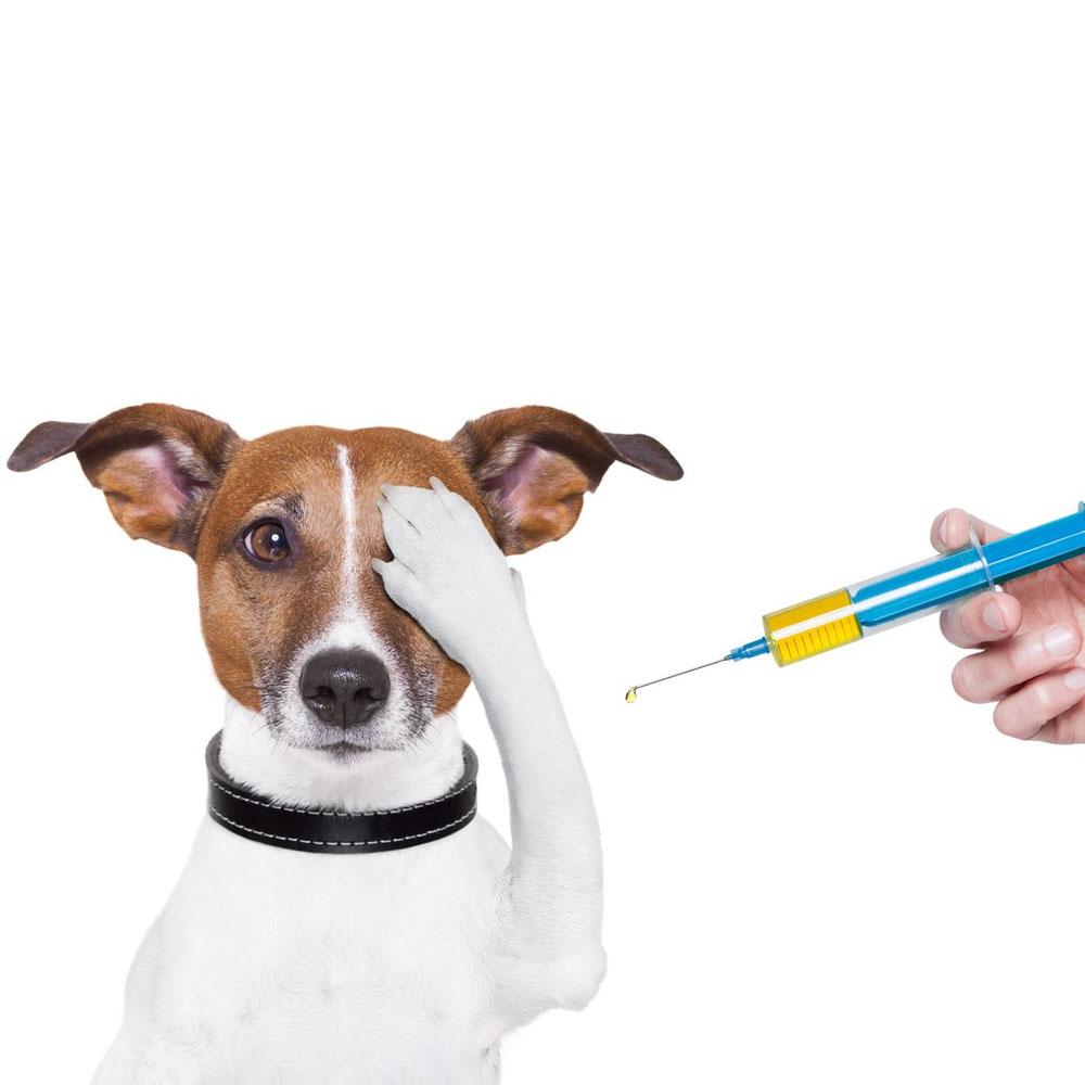 Importanta vaccinarilor animalelor de companie