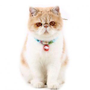 Accesorii pisici
